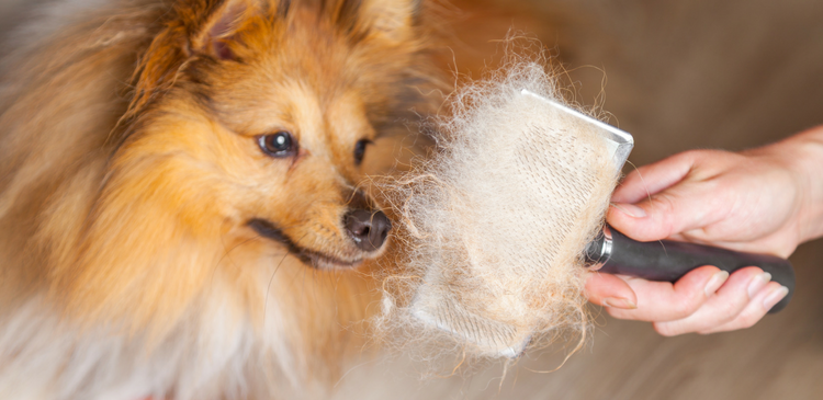 The Ultimate Guide To Pet Hair And Your AC